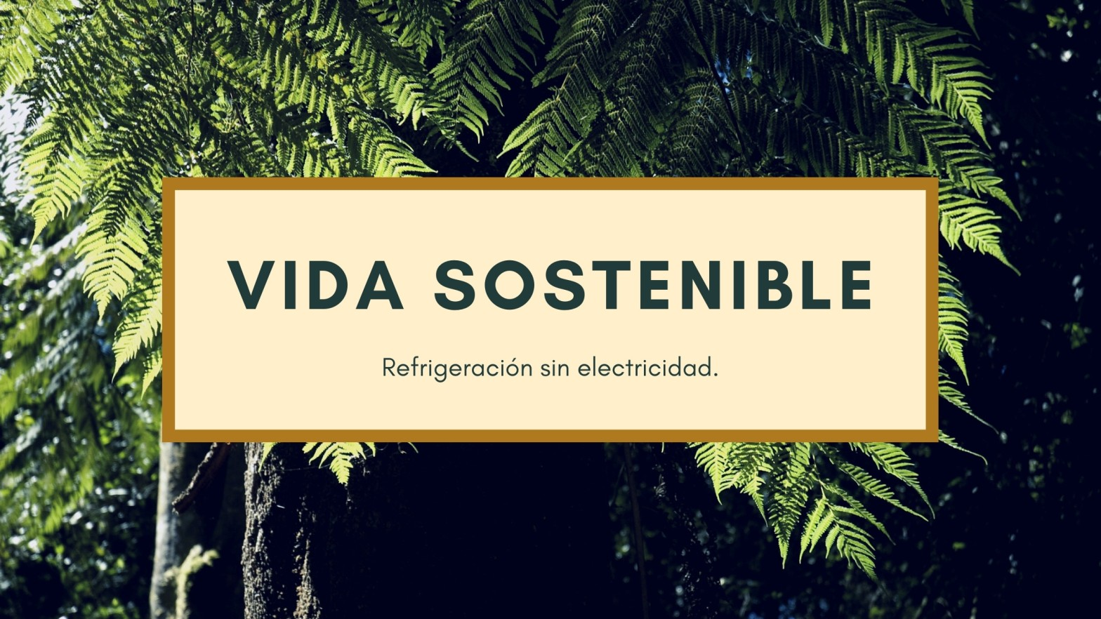 Vida sostenible, refrigeración sin electricidad sobre un fondo de árboles.